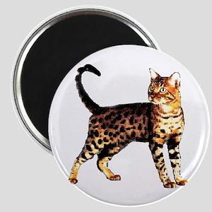 Bengal Cat: Raja Magnet