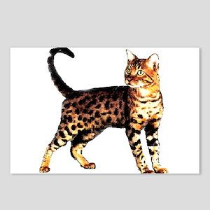 Bengal Cat: Raja Postcards (Package of 8)