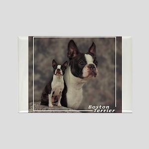 Boston Terrier-1 Rectangle Magnet
