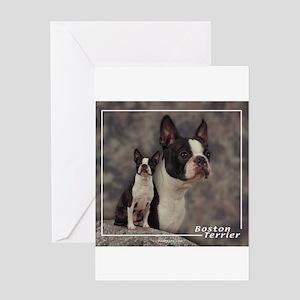 Boston Terrier-1 Greeting Card