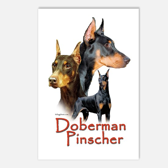 Doberman Pincher-1 Postcards (Package of 8)