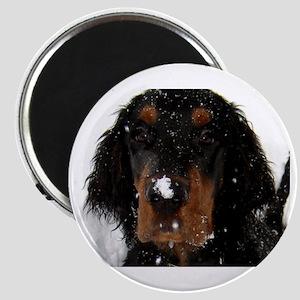 Gordon Setter Pup: Fun in the Snow Magnet