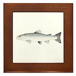 Sea trout Sea Run brown trout Framed Tile