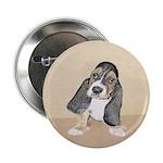 Basset Hound Puppy 2.25