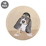 Basset Hound Puppy 3.5