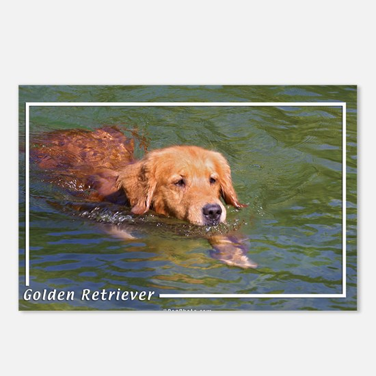 Golden Retriever-3 Postcards (Package of 8)