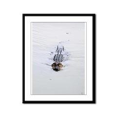 Brandon FL Pond Alligator Framed Panel Print