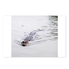 Brandon FL Pond Alligator Postcards (Package of 8)