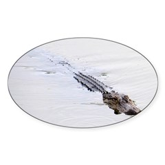 Brandon FL Pond Alligator Decal