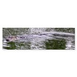 Brandon FL Pond Alligator Bumper Sticker