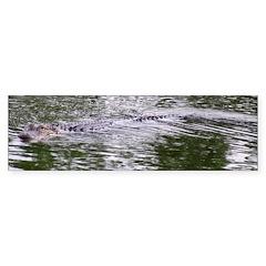 Brandon FL Pond Alligator Bumper Bumper Sticker