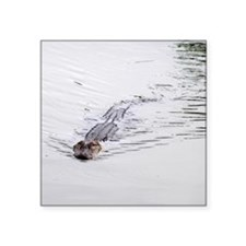 Brandon FL Pond Alligator Sticker