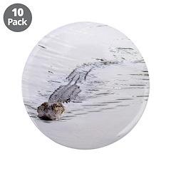 Brandon FL Pond Alligator 3.5