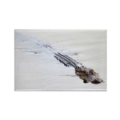 Brandon FL Pond Alligator Magnets
