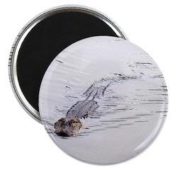 Brandon FL Pond Alligator Magnets