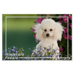 Miniature Poodle-4 Posters
