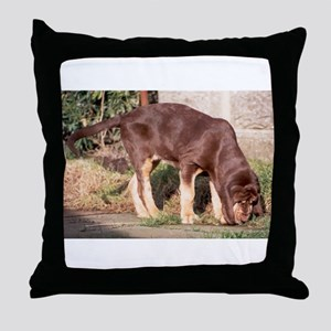 LS puppy liver and tan bloodhound Throw Pillow