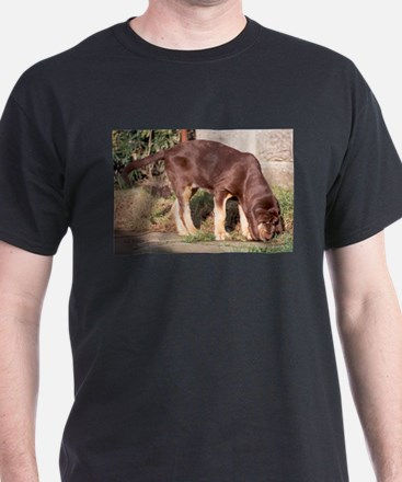 LS puppy liver and tan bloodhound T-Shirt