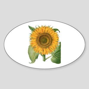 Vintage Sunflower Basilius Besler Sticker