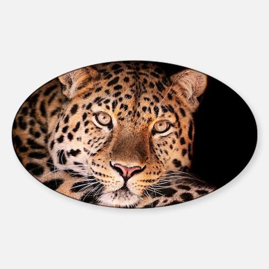 Jaguar Decal