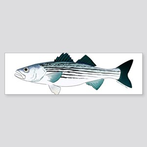 Striped Bass v2 Bumper Sticker