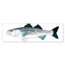 Striped Bass v2 Bumper Sticker