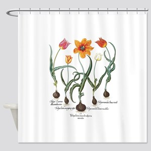 Vintage Tulips by Basilius Besler Shower Curtain