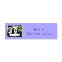 Bearded Collie (Painting) Car Magnet 10 x 3