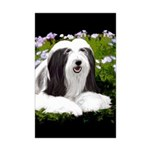 Bearded Collie (Painting) Mini Poster Print