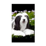 Bearded Collie (Painting) Rectangle Car Magnet