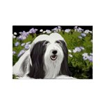 Bearded Collie (Painti Rectangle Magnet (100 pack)