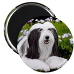 Bearded Collie (Painting) Magnet