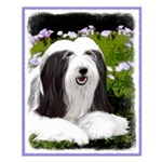 Bearded Collie (Painting) Small Poster