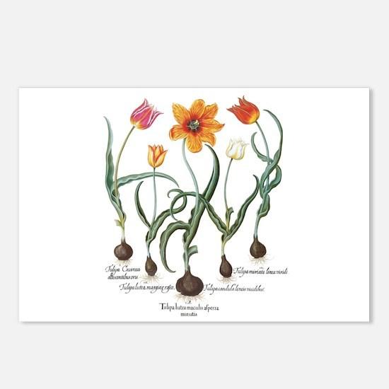 Vintage Tulips by Basiliu Postcards (Package of 8)