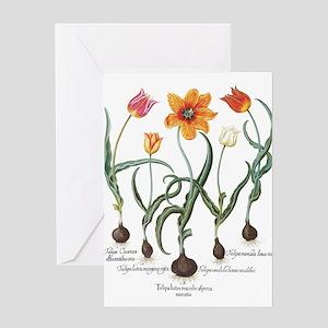 Vintage Tulips by Basilius Besler Greeting Cards