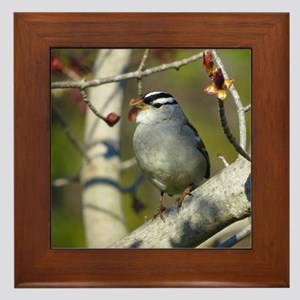 white crowded sparrow Framed Tile