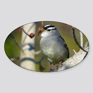 white crowded sparrow Sticker