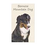 Bernese Mountain Dog Sticker (Rectangle 10 pk)