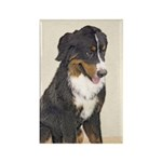 Bernese Mountain Dog Rectangle Magnet (10 pack)