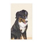 Bernese Mountain Dog Sticker (Rectangle 50 pk)