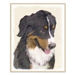 Bernese Mountain Dog Small Poster