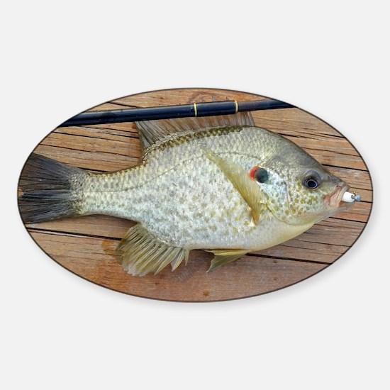 Shell Cracker 2. Red Ear Fish Retro Sticker (Oval)