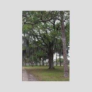 Spanish Moss. Nature Scene. RCM Rectangle Magnet