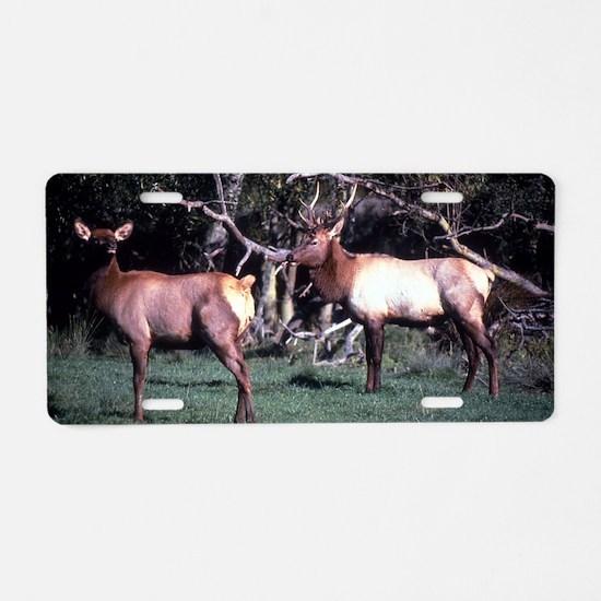 Roosevelt Elk Aluminum License Plate