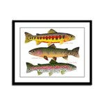 3 Western Trout Framed Panel Print