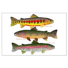 3 Western Trout Posters