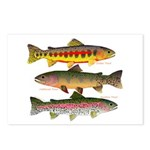 3 Western Trout Postcards (Package of 8)