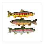 3 Western Trout Square Car Magnet 3