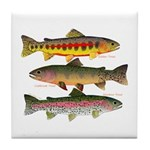 3 Western Trout Tile Coaster