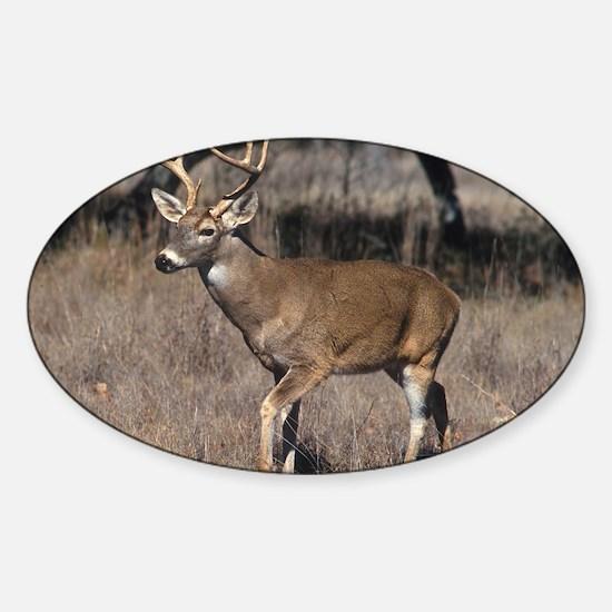 Deer Sticker (Oval)